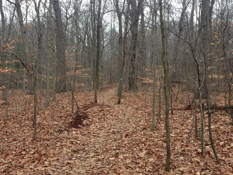 A smoother section at the top of a hill along the final mile of Slippery Rock Trail. This section is book-ended by small climbs that require a little bit of walking.