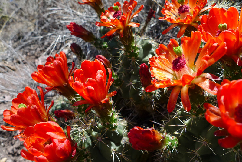 The Lost Mine Trail offers a great introduction to the flora in Big Bend National Park.