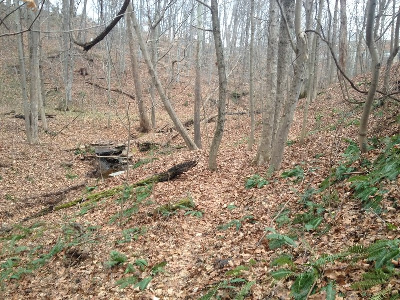 The Ewing Trail traveling along the hillside and following a small creek.