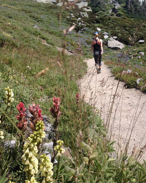 Nearing the top of Skyline Trail.