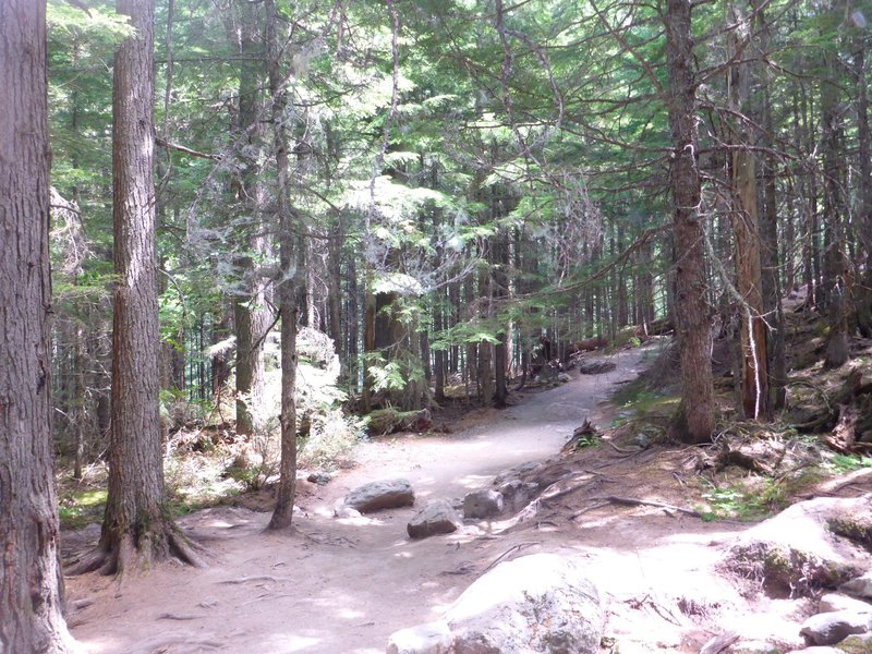 The Avalanche Lake Trail winds through a thick canopy of cedars, flanked sometimes by the sounds and breathtaking sights of the creek, and sometimes by giant rocks overgrown with emerald moss. Sun peeks in.
