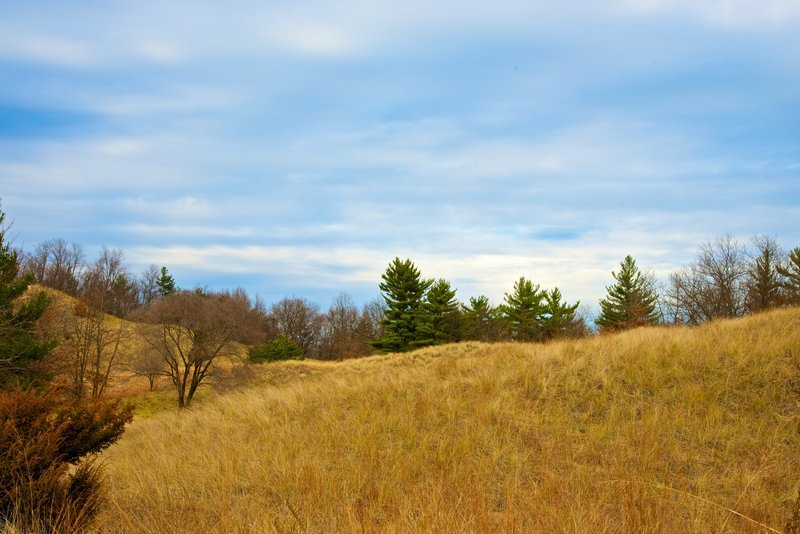 View of the Lake Michigan dune covered in marram grass.