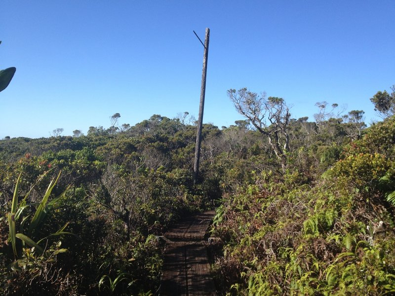 Telephone pole and boardwalk along the trail.