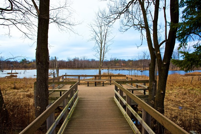 The marsh overlook on the Great Marsh Trail is an incredible location for birding.