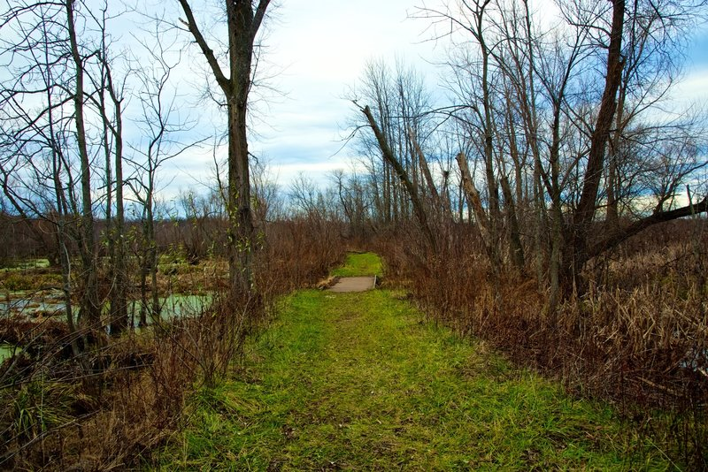 The Great Marsh Trail features the local wetlands.