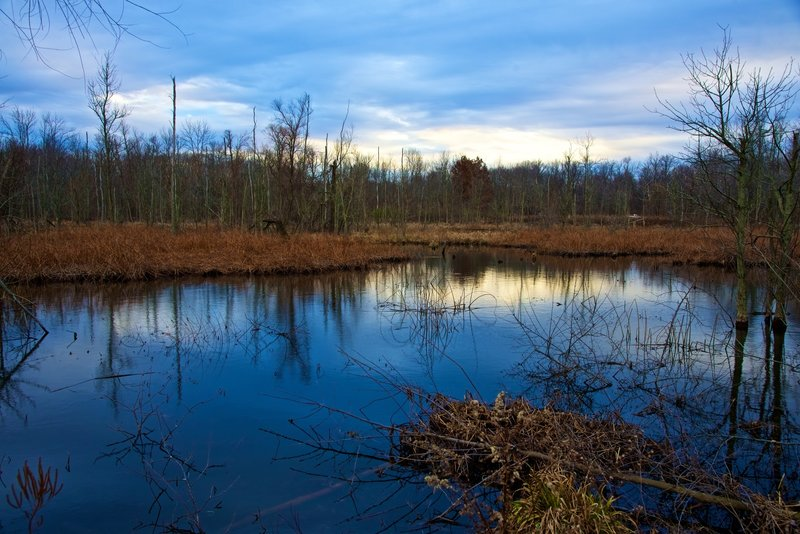 Great late fall view from the paved handicap-accessible Great Marsh Trail.