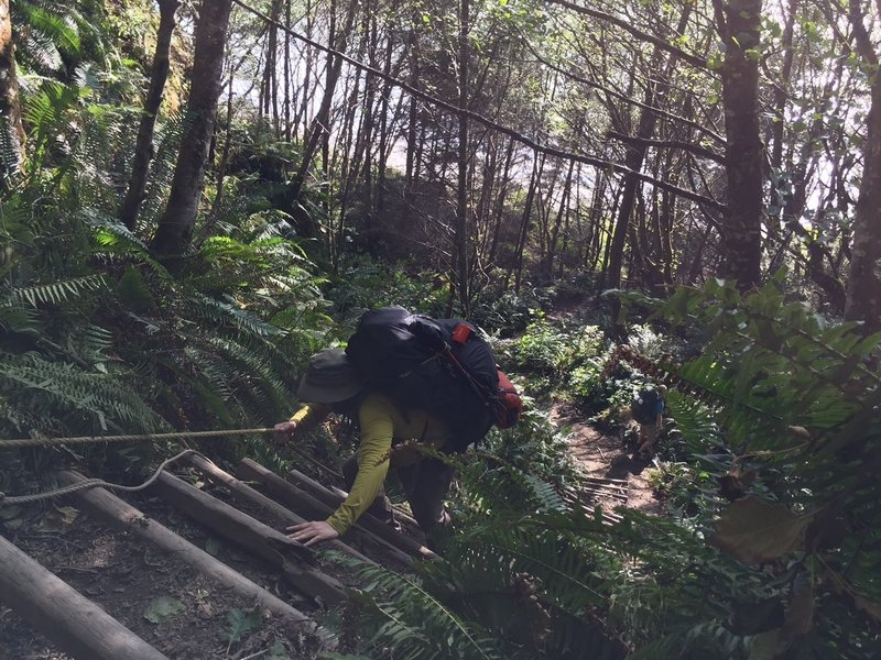 One of the rope ladders on the trail.