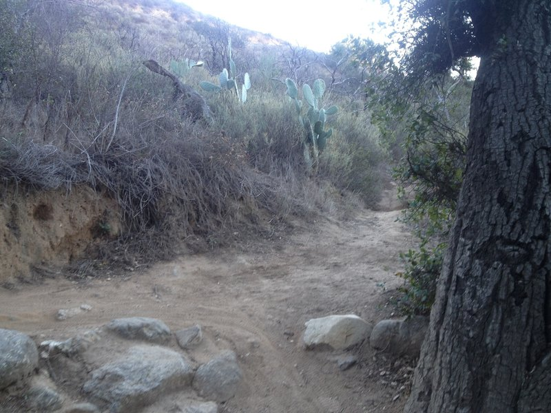 About halfway up El Prieto, a shortcut to Brown Mountain Trail cuts off to the right. El Prieto continues to the left.