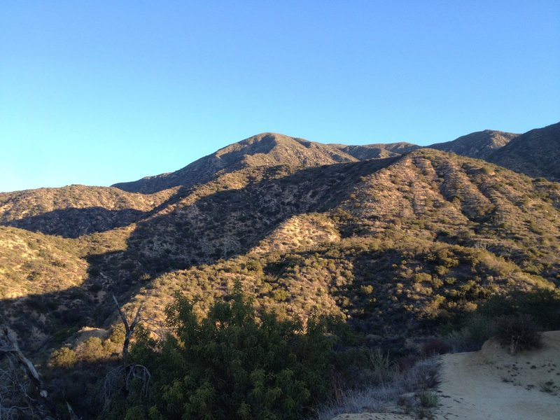 Looking up the side of Brown Mountain.