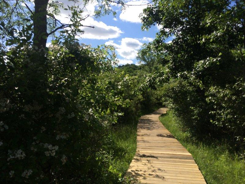 Boardwalks wind down the Marsh Trail.