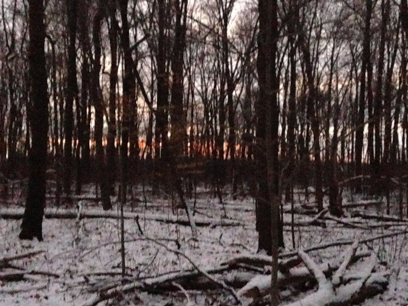 A grainy photo of the sun rising over Lake Arthur, looking southeast through the trees.