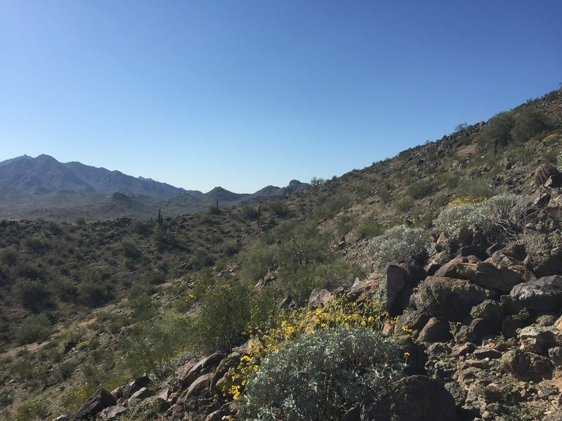 Hiking up the Estrella Mountains.