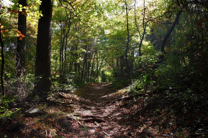 Fox Hollow Trail at Dickey Ridge.