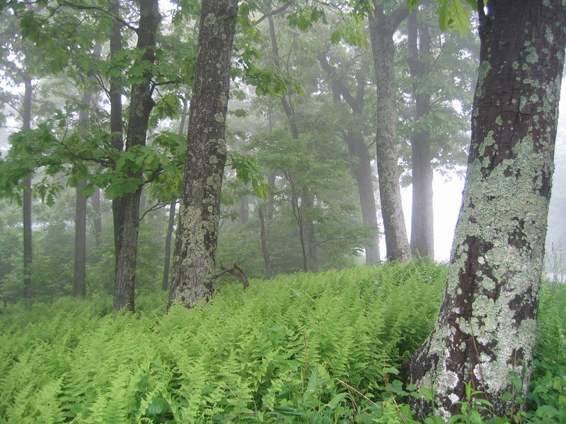 More fog along Dickey Ridge.