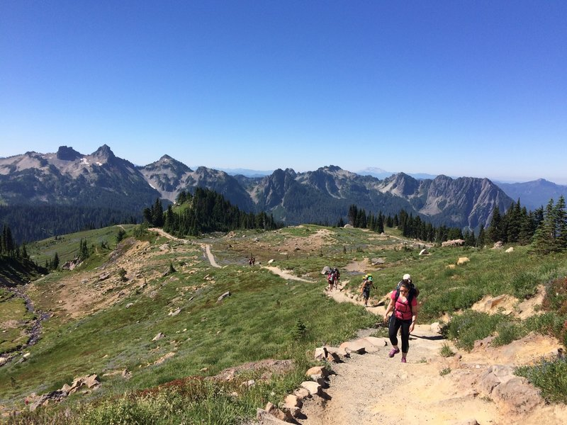 On the way up the Skyline trail in July 2015.