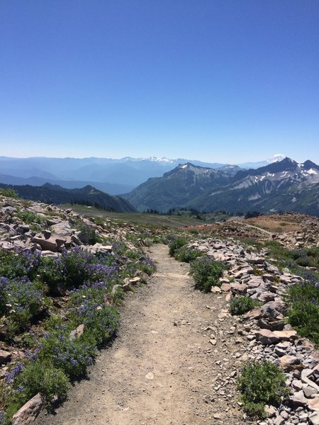 Wildflowers reappear as we lose elevation on the Skyline Trail.