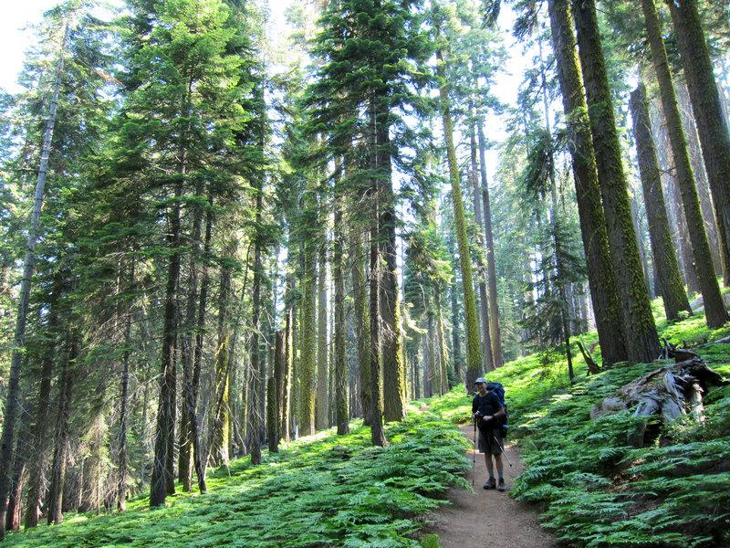 Hiker on High Sierra Trail near Crescent Meadow
