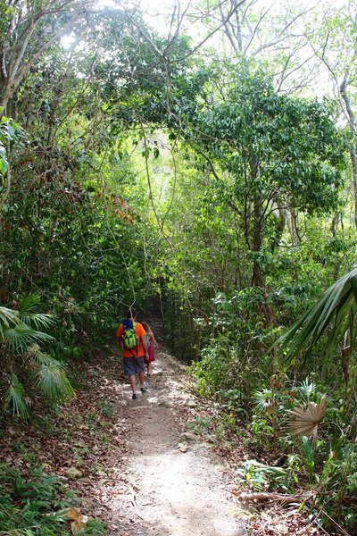 Through the jungle on Reef Bay Trail.