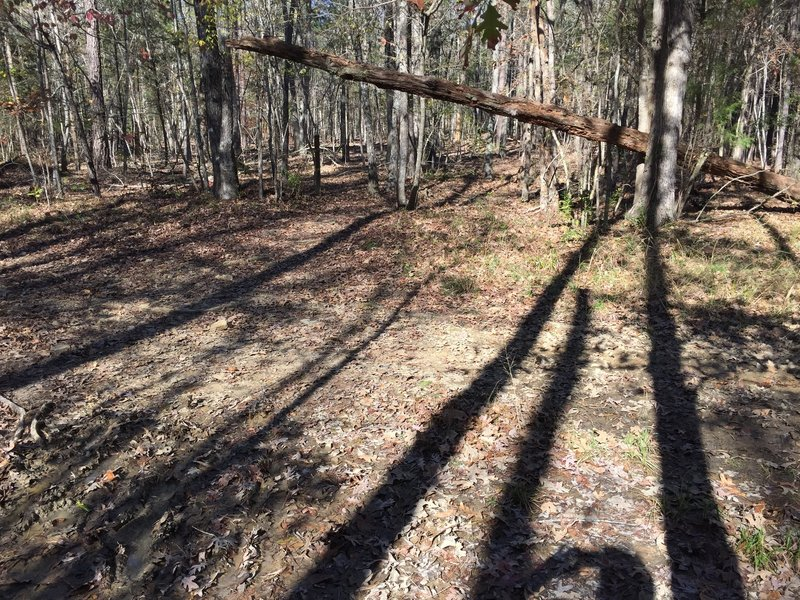 Long shadows during late-day sun on Crow Branch Overlook Loop Trail where it crosses a utility easement cut (PSNC Corridor)