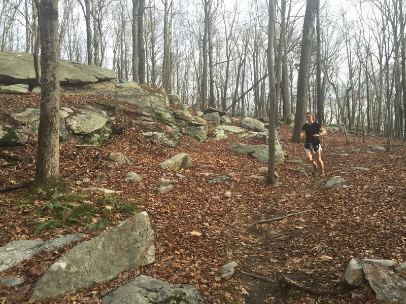 A typical granite outcrop on Green/White Trail.