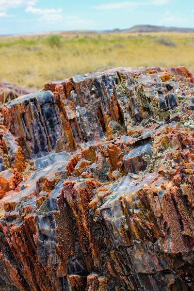 A petrified wood close-up. The petrified wood can bee seen along the Crystal Forest Trail.