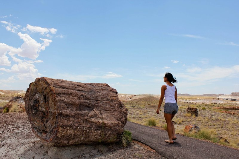 The walker in the photo puts a sense of scale on a massive piece of petrified wood.