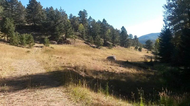 Grassy trail.