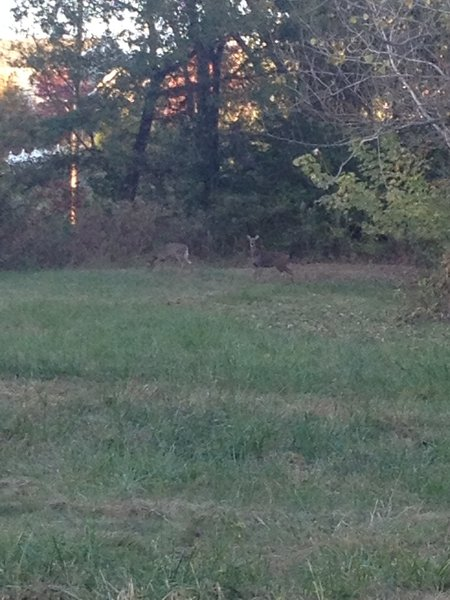 A couple of deer enjoying the evening on the County Crossing Trail.