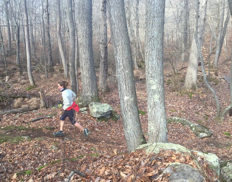 Vernal pools, rocks, and trees abound on this awesome trail.