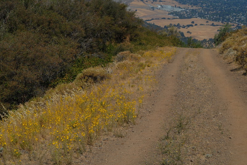 The dirt fire road.