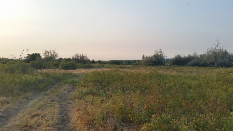 Much of the trail is through low grass and sand.