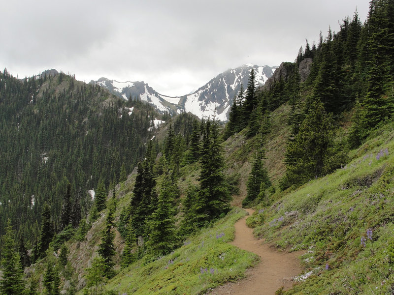 Olympic National Forest Mount Townsend Trail.