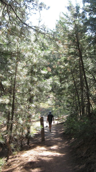 Descending through forest from Stack Rock.
