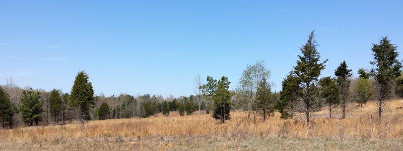 Meadow of Horton Grove.