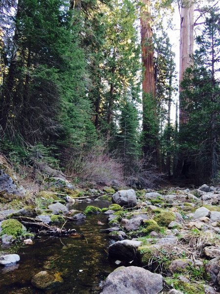 Redwood Creek, just south of Sugarbowl and Hart Trail Loops intersection.