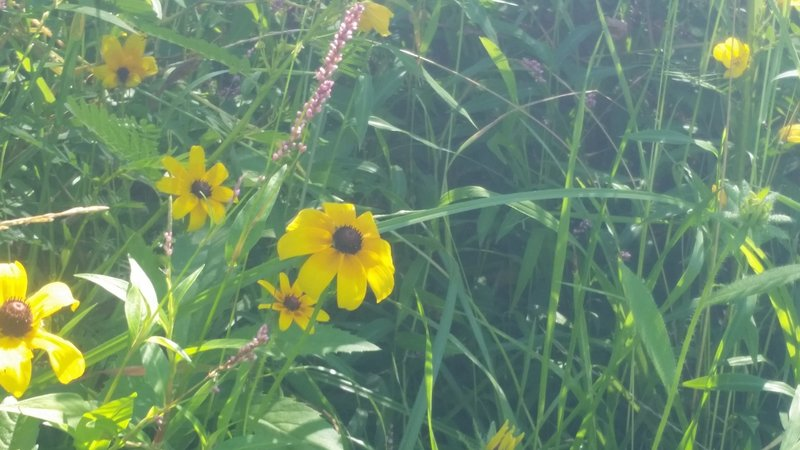 Wildflowers along the Canal.
