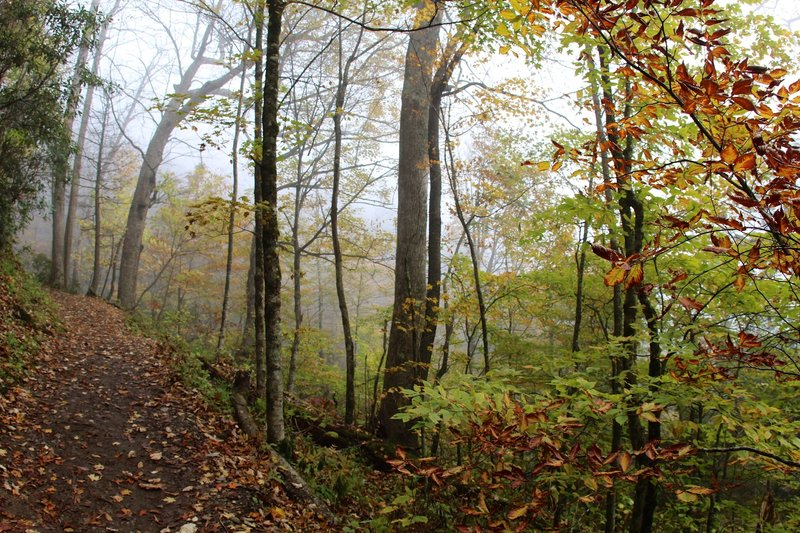 Chimney Tops Trail - through the fall foliage.
