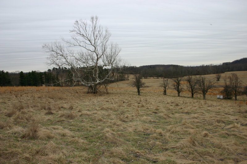 Fields of Valley Forge National Park.