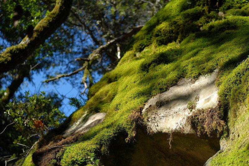 Mossy rocks in Castle Rock State Park.