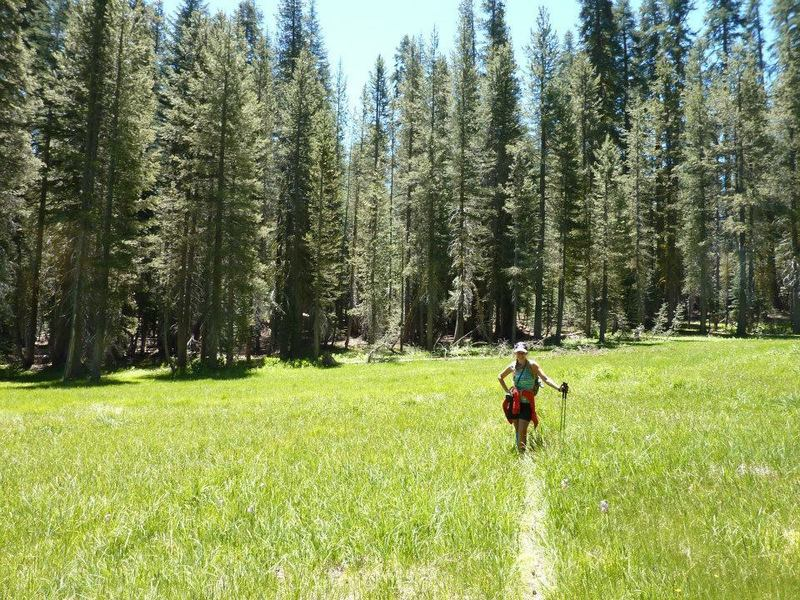 Trail opens up to many beautiful meadows.