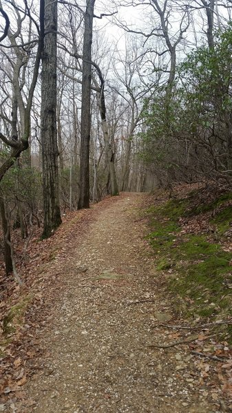 Nearly all of the Mount Joy trail is well maintained hard pack surface two people wide