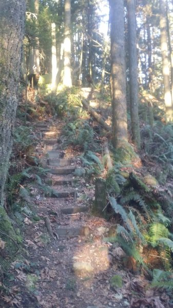 Steps cut into the trail by some volunteers. Hard to tell but it gets really steep here.