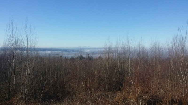 Popping out of the dense forest puts you on a plateau where you have some great views of the Fraser River and area (when it's not foggy).