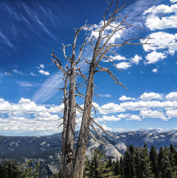 Spindly trees at altitude.