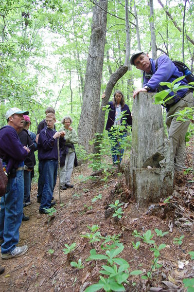 Hikers check out a tree stump during the annual May Rhodo Ramble.
