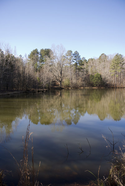 The pond along the Sowell Trail in January 2015