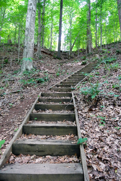 The stairway up the Beech Bluff is short, but steep. Take a moment at the top to catch your breath and enjoy the view!