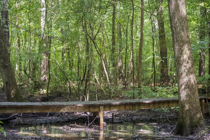 A boardwalk at Swift Creek Bluffs Nature Preserve in July.