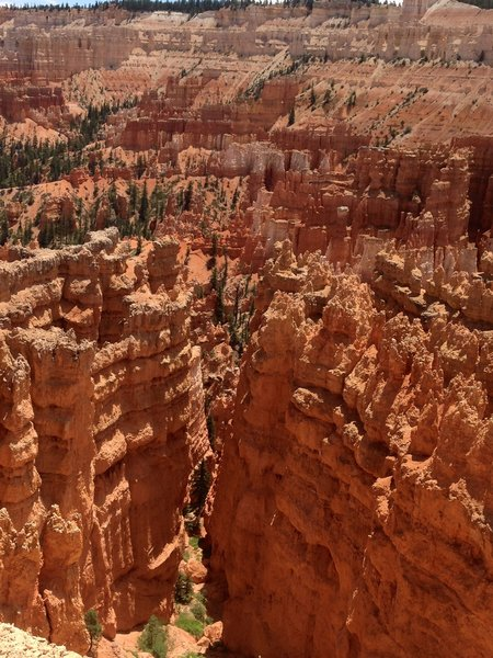 View south towards Bryce Point.