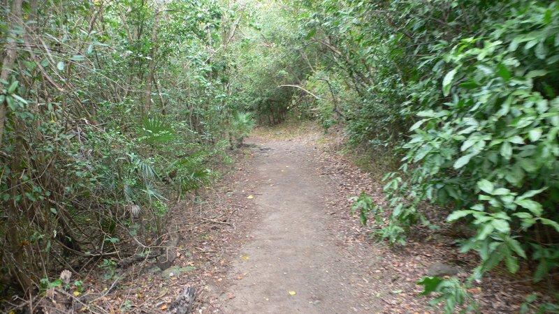 Francis Bay Trail.